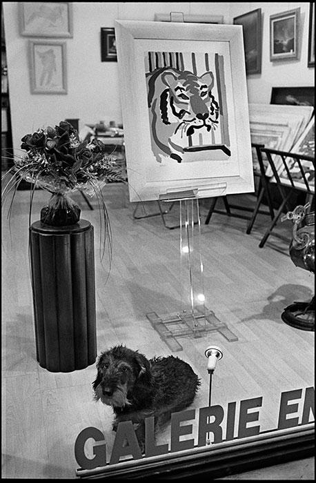 5-Galerie-chien